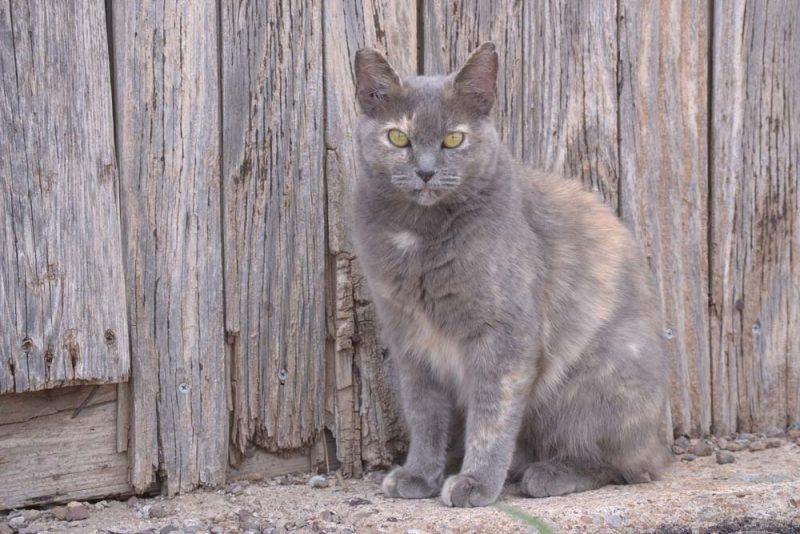 Murphy Street Cat