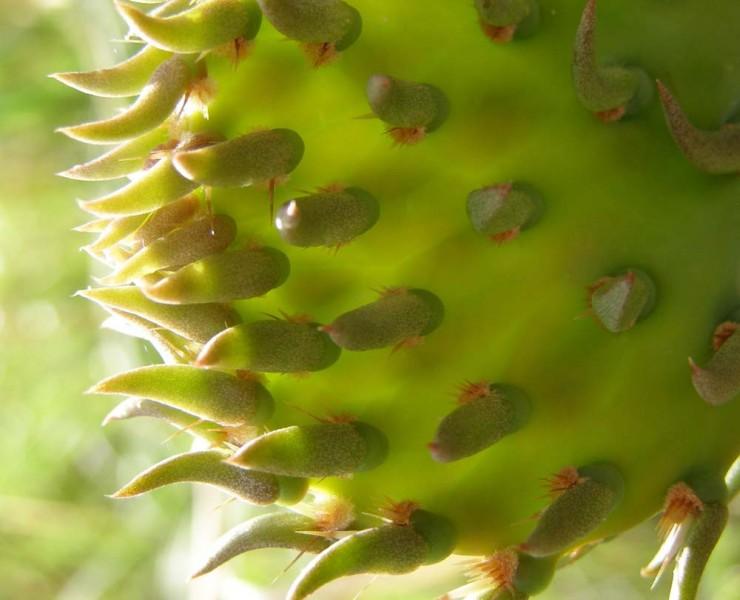 Cactus…