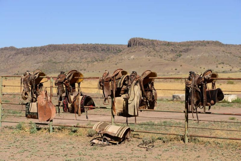 o6 Saddles