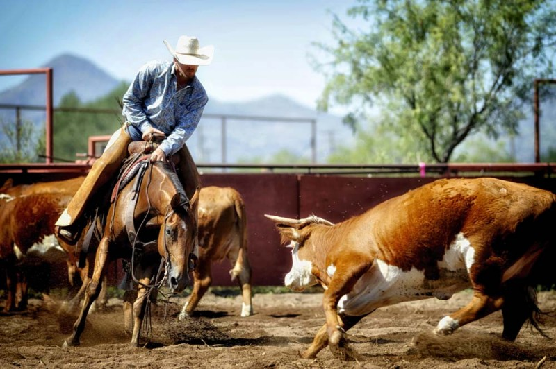 O6 Cutting Horse Competition Alpine Texas