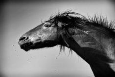Mustang Windy