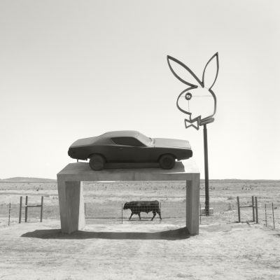 Bovine & Bunny by 2016 Contest Judge Crystal Allbright